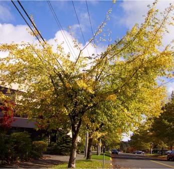 Proper tree care reduces power outages