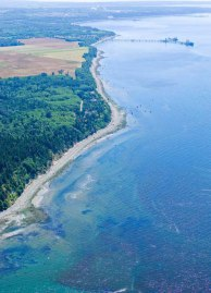 Photo: DNR Cherry Point Aquatic Reserve