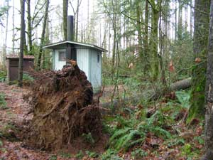 Photo of fallen tree near outhouse in Mima Falls Campground.