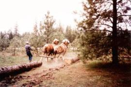 Horse drawn logging