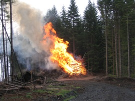 Slash burn in Capitol State Forest