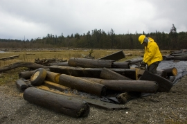 Suquamish Tribe's Forestry Manager David Mills cuts up creosote logs that were pulled from the marsh area in Doe-Keg-Wats this week by helicopter. The tribe and Department of Natural Resources removed the logs from the wetland area that have drifted ashore over time.