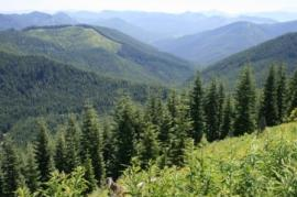 Washington State Trust forests