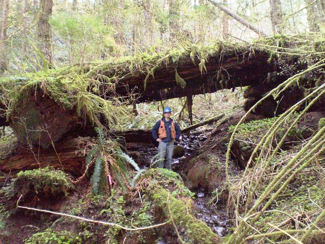 Historic bridge in Capitol State Forest