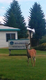 Deer at DNR