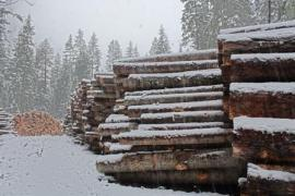 log piles in snow