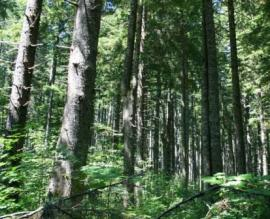state trust forest