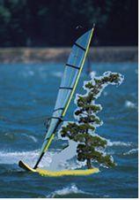 tree wind sailing