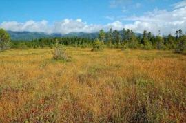 Crowberry Bog