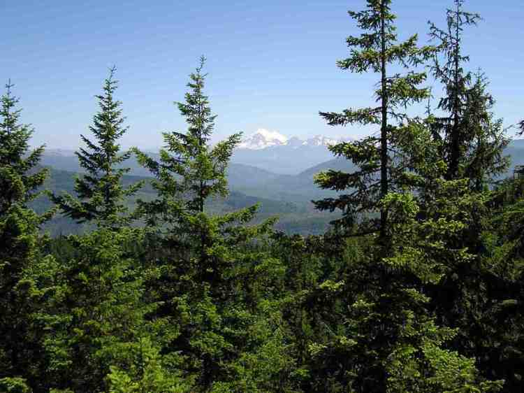 Mount Baker seen from Blanchard Forest