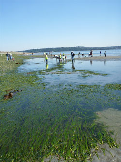 Vashon-Maury Island Low Tide Celebration - July 2011