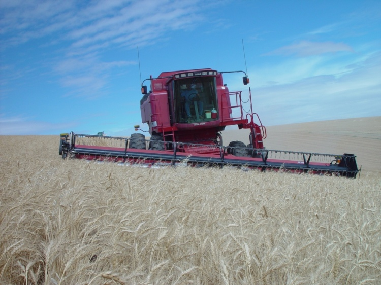 wheat harvest eastern Washington state