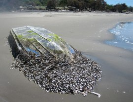 Boat washed up on beach.