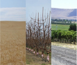 3 photos of agricultural leases: wheat, fruit trees, vineyards.