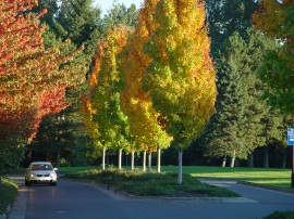 Keep urban forests in your community healthy