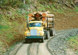 A truck loaded down with timber is driving down a forest road