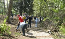 Volunteers pull English ivy