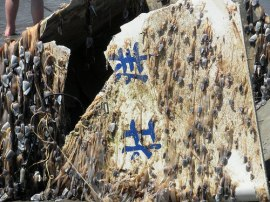 Japanese consulate in Seattle confirmed boat came from Japan and was washed out to sea by the March 11, 2011, tsunami.