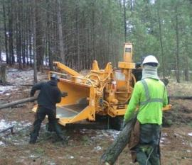 Thinning trees and removing brush