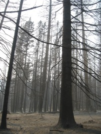 Table Mountain Fire scorched acres of State Trust Lands in Naneum State Forest