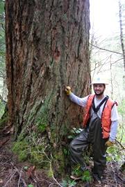 Doug-fir