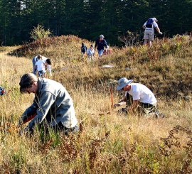 Volunteers remove invasive Scott's Broom weeds from Mima Mounds Natural Area Preserve on National Public Lands Day (Sept. 26, 2009). Photo: Nancy Charbonneau/ DNR.