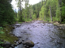 Sheep Creek Campground offers beautiful forests and streams for a relaxing getaway. Photo: Kyle Pomrankey, DNR.