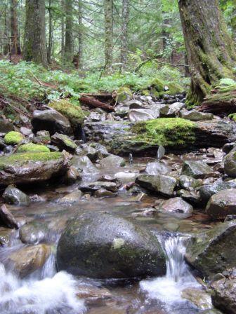 Skamania Creek