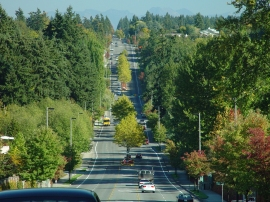 Increasing the tree canopy is becoming a bigger issue for cities, as they plan for healthier communities.