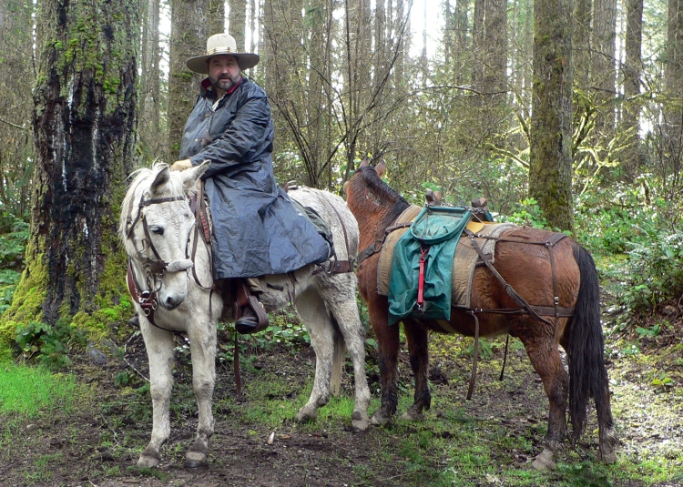 Capitol State Forest horse