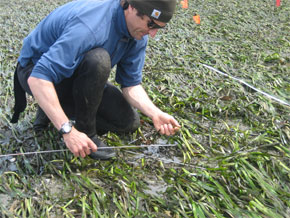 Photo of Jeff Gaeckle, seagrass ecologist, monitors an eelgrass bed on San Juan Island. Photo: Anja Schanz.
