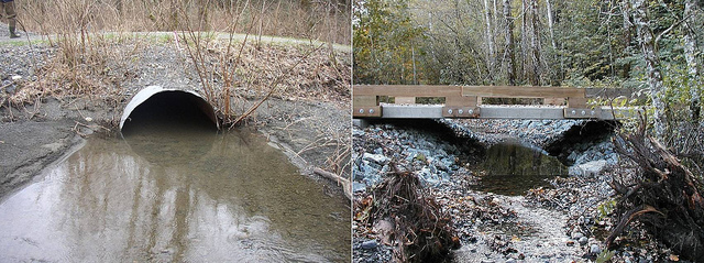 Before (left) and after photos show how a culvert replacement in Whatcom County opened up this tributary to Kendall Creek to more fish. Photo: DNR/DFW/RCO/Project Sponsors