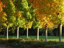 Healthy trees have endless benefits for cities.