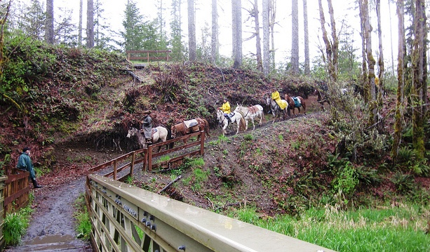pack animals in Capitol State Forest
