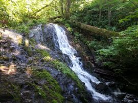The Mima Falls Trail in the Capitol State Forest offers views of cascading falls. Photo: DNR.