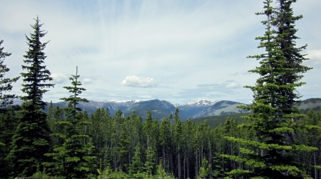 Cold Springs, Loomis State Forest, Okanogan County