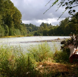 Many forested areas offer more than just economic value to communities. Photo: DNR.
