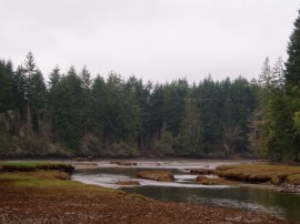 A misty day at Schneider Estuary in Kennedy Creek NRCA. Photo: DNR.