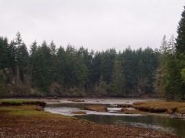 A misty day at Schneider Estuary in Kennedy Creek NRCA. Photo: DNR.