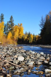 The Teanaway Community Forest was identified as critical habitat  for the conservation and restoration of many species, especially  fish. Photo: The Wilderness Society
