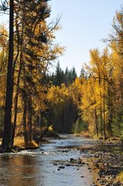 Fall view of the Teanaway Community Forest, the first Washington State-managed community forest. Photo: The Wilderness Society.