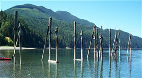 Photo of pilings in Quilcene Bay in Hood Canala.
