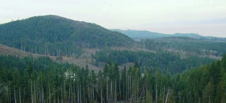 forested area near Crescent Lake on the Olympic Peninsula