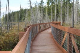 A  new boardwalk over the wetlands at Cranberry Lake.