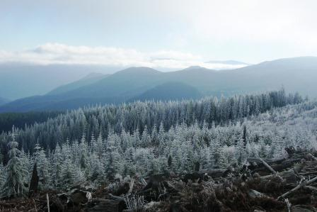 forest under snow cover