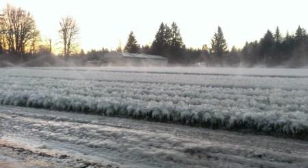 Watering DNR's Webster Forest seedlings