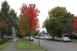 With a grant from DNR's Urban and Community Forestry Program, the City of Tacoma's Hilltop neighborhood planted trees in celebration of Arbor Day.
