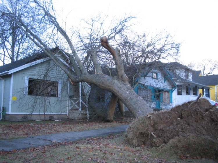 Wind with drenching rains can damage or topple some trees. Photo: DNR