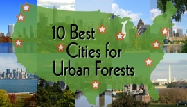 Seattle is one of the best cities for urban forests