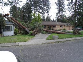 Wind storm topples trees in Spokane area. Photo by Garth Davis